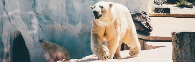 6 Things You Should Know About Polar Bears